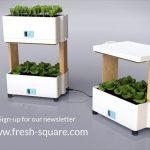 Fresh Square